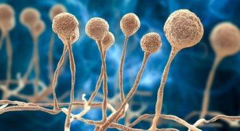 A mucormicose, também conhecida como 'fungo preto', já acometeu quase nove mil pessoas na Índia