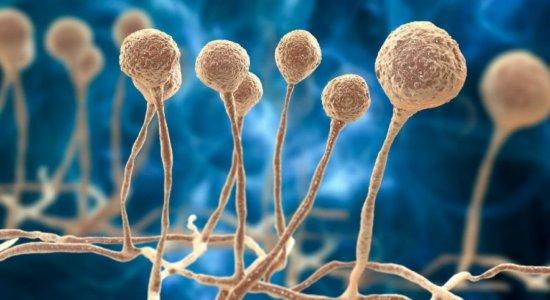 Fungo preto: A infecção já está no Brasil? Há relação entre a mucormicose e a covid-19? Como é feito o tratamento da infecção? confira respostas