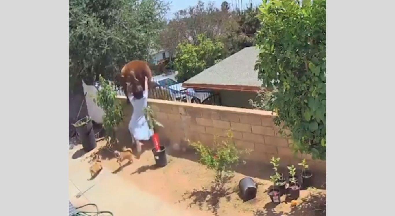 Vídeo foi postado em uma rede social e viralizou