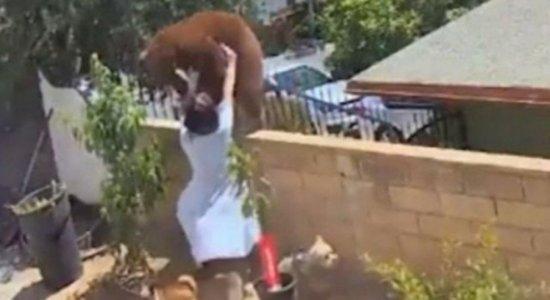 Mulher enfrenta urso para salvar cachorros nos EUA; veja vídeo