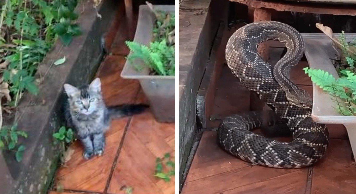 A gata 'salvou' o dono da cobra cascavel