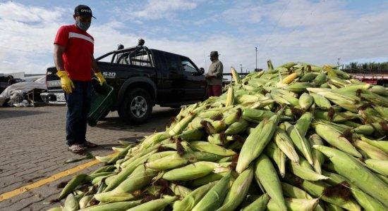Veja preço da mão de milho no Ceasa de Pernambuco no São João de 2021