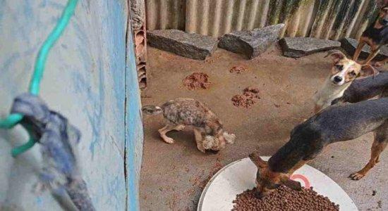 Vídeo mostra desespero de cachorros famintos presos em casa no Recife e cria rede de solidariedade; Veja como ajudar