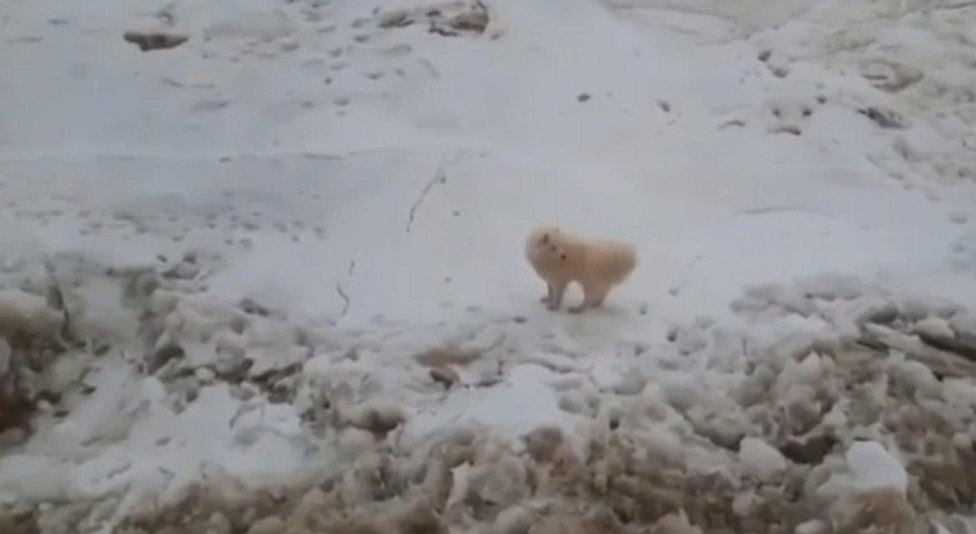 Cachorra foi resgatada