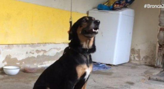 Dono morre de covid-19 e cadela precisa de um novo lar; saiba como adotar