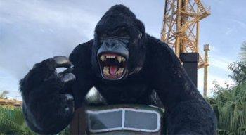 Gorila Gigante é uma atração do Beto Carrero World