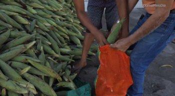 Começa a funcionar corredor do milho em Olinda; veja pontos de venda e o preço da mão