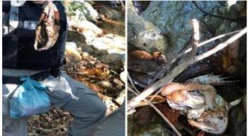 Rã desossada foi encontrada por policiais durante busca por Lázaro Barbosa.
