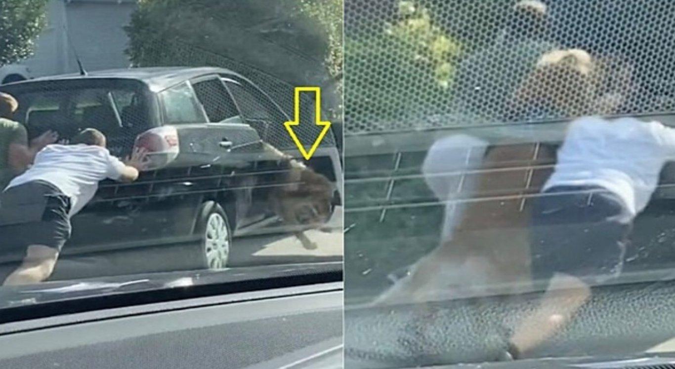 Cahorro desce do carro para ajudar donos a empurrar veículo