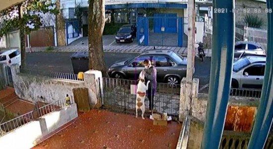 A cadela teve a roupa furtada