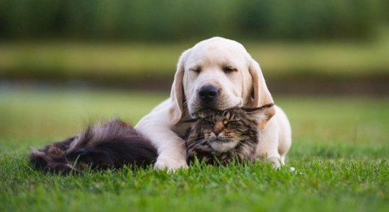 Feira I Love Pet, no RioMar, destaca trabalho de coletivos para proteção de animais no Recife