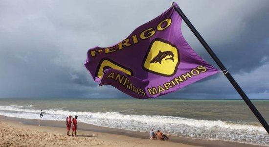 Ataques de tubarão: trecho da praia de Piedade é interditado; veja onde não se pode mais tomar banho de mar