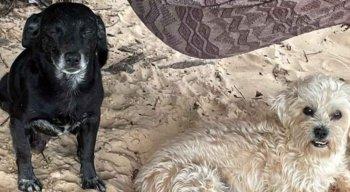 Bahuan (E) e Marley (D) morreram ao tentar defender os tutores de pitbull