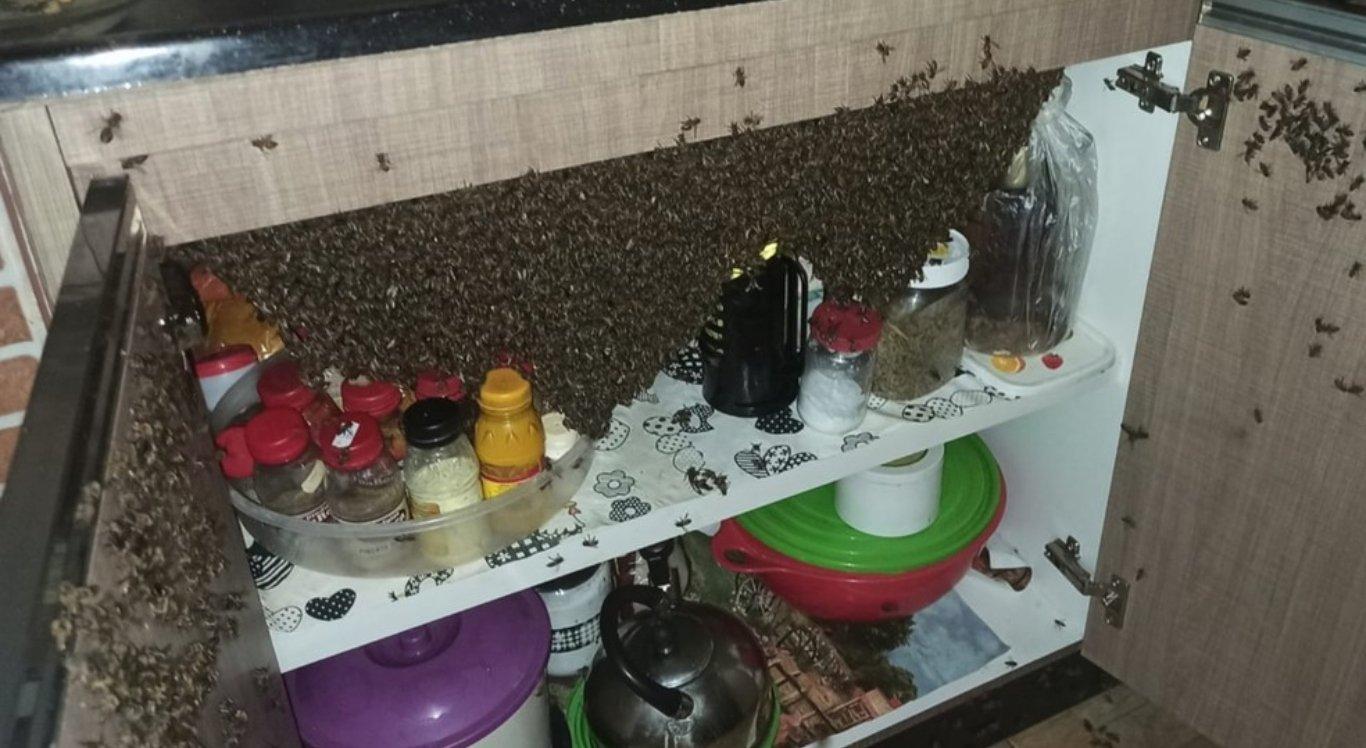 Millhares de abelhas invadem casa e se instalam em armário na cozinha