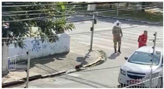 Vídeo: Pessoas são atacadas por enxame de abelhas em Boa Viagem, na Zona Sul do Recife