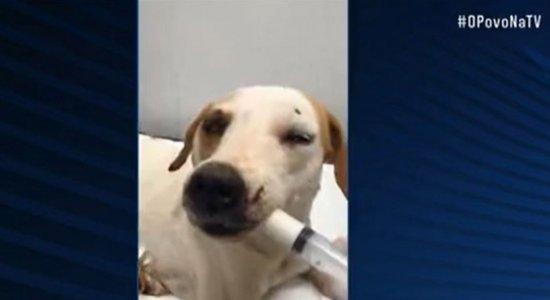 Cachorro é espancado pelo dono no Cabo de Santo Agostinho, Grande Recife, e precisa de ajuda; saiba como ajudar