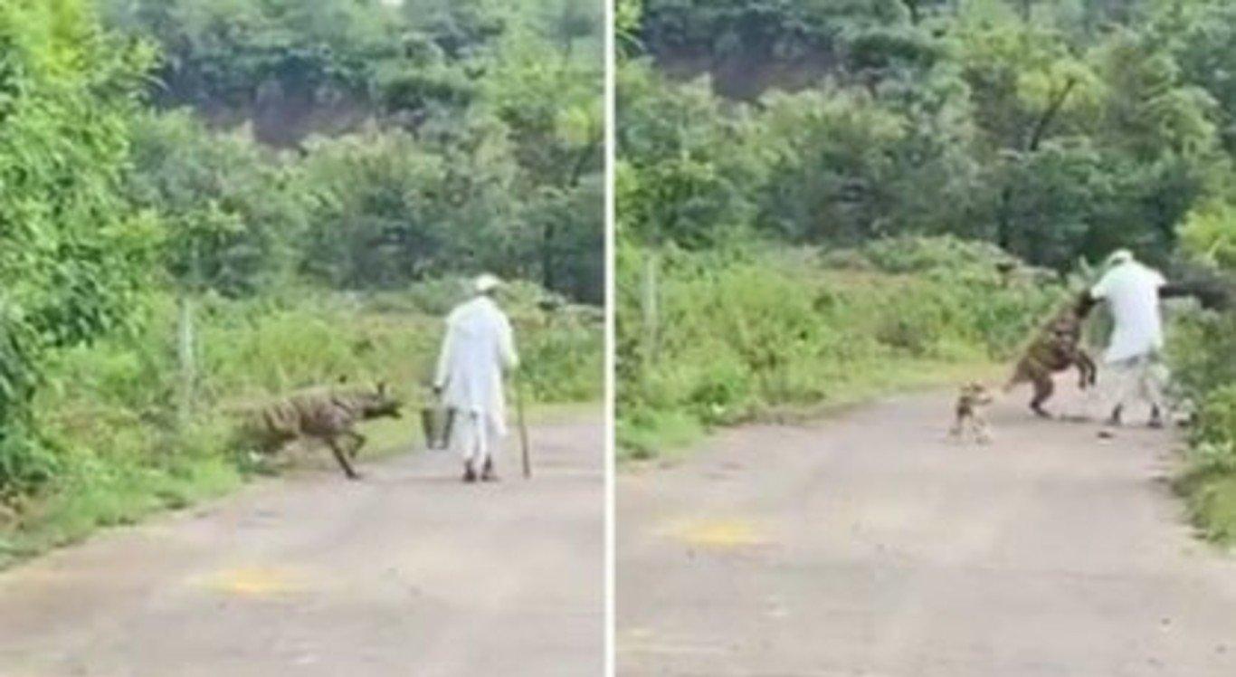o idoso foi atacado pela hiena enquanto andava com o cachorro