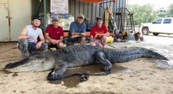 Objetos pré-históricos foram encontrados dentro do estômago do crocodilo