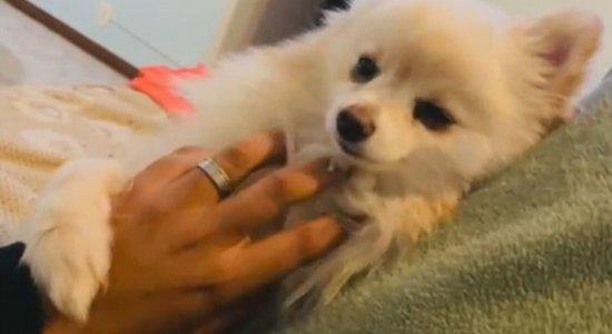 Mulher recebe o próprio cachorro morto após levá-lo para pet shop