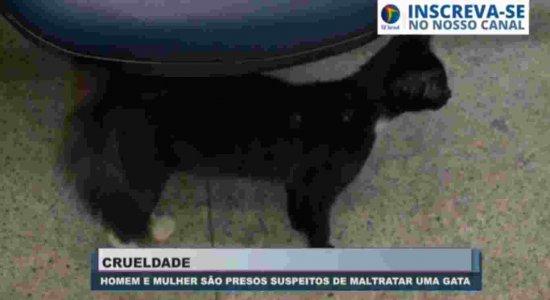 Casal é preso acusado de maltratar gata na Zona Sul do Recife; animal estava com enforcador de arame