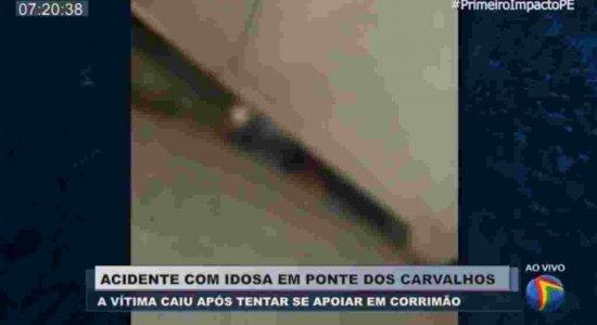 Vídeo: Mesmo preso, Pitbull mata cão durante ataque dentro de fábrica, em Jaboatão do Guararapes