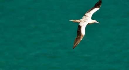 Arquipélago de Fernando de Noronha. Turismo - ilha - céu - praia - natureza.