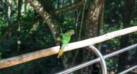 Viveiro Cecropia tem passarela suspensa, onde os pássaros podem pousar para interagir quando houver visitantes