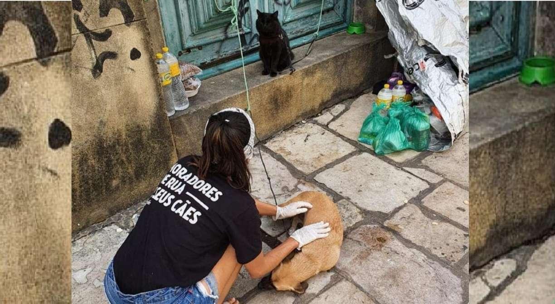 Protetores se mobilizam para ajudar animais de rua durante a pandemia do coronavírus