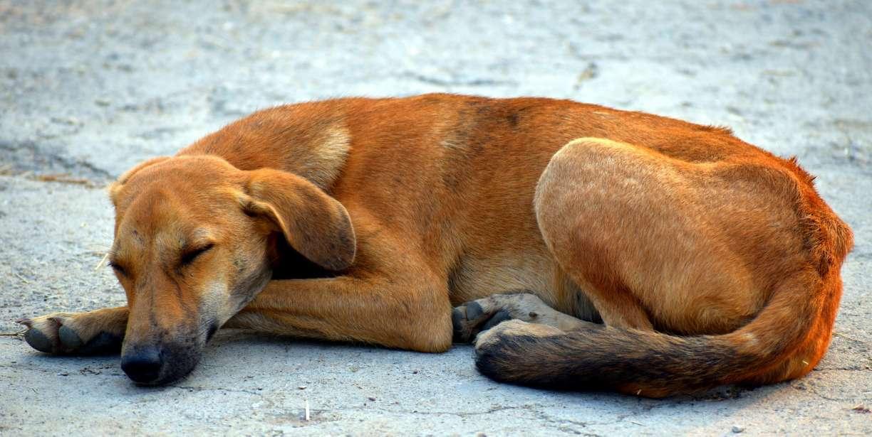 Restaurante popular vai doar comida para animais de rua no Recife na pandemia do coronavírus