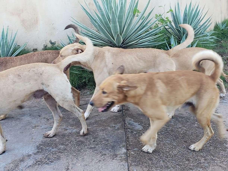 Gangue canina: vira-latas atacam quem vai em praia da Bahia