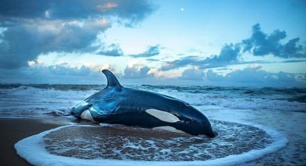 Baleia orca encalha em Guarajuba