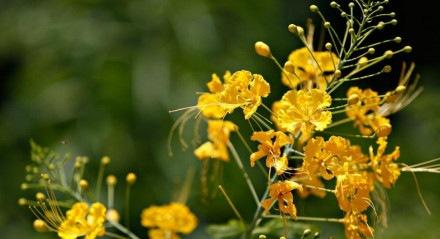 Flores / primavera / botânica / flora