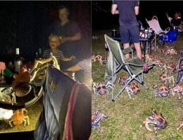 Os caranguejos invadiram um churrasco na Austrália