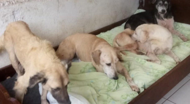 ONG no Agreste de Pernambuco pede ajuda para cuidar de animais abandonados