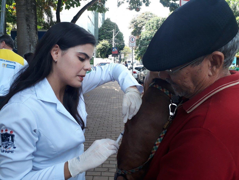 Recife inicia campanha de vacinação antirrábica para cães e gatos neste sábado (24)