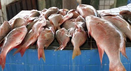 Cuidados na hora de comprar e consumir peixes.
