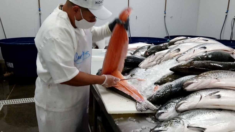 Brasileiro aumenta consumo de peixe durante a pandemia da covid-19