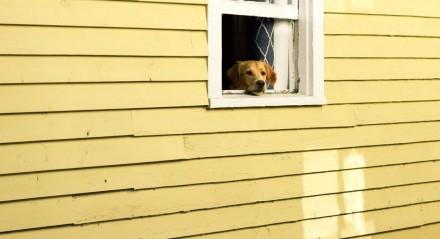 cachorro / casa / preso / quarentena / pandemia / cão / pet