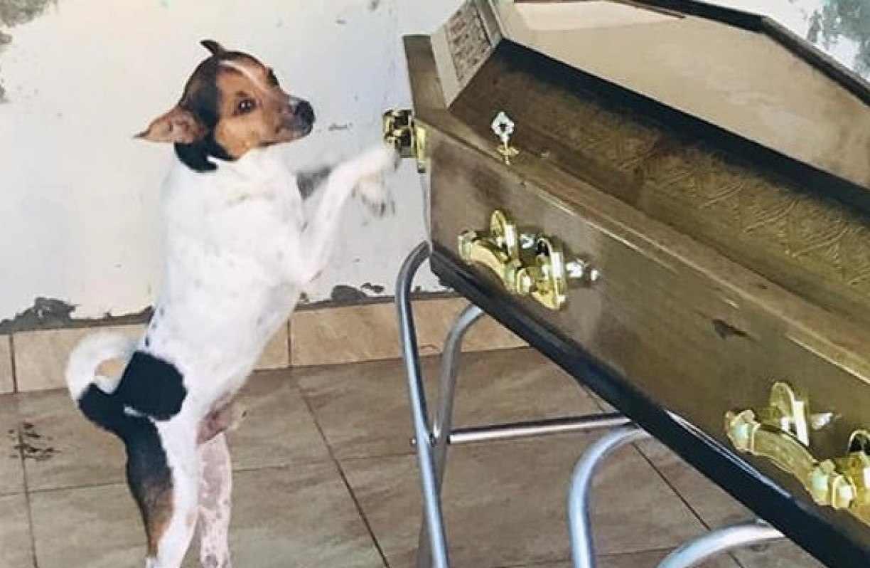 Cachorro chora e acompanha velório da dona ao lado do caixão