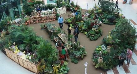 Feira conta com exposição de diversas plantas, como costela-de-adão, cactos, bonsai, rosas do deserto, espada de São Jorge e orquídeas