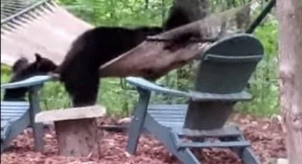 Mamãe ursa e filhotes brincam com a rede em frente à uma cabana, nos EUA