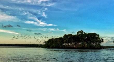 A revoada dos guarás é o grande atrativo do Delta do Parnaíba.