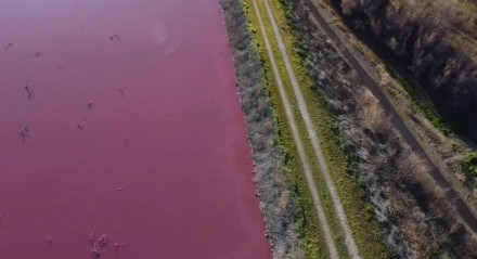 Vizinhos da lagoa relataram odores nauseantes e proliferação de insetos