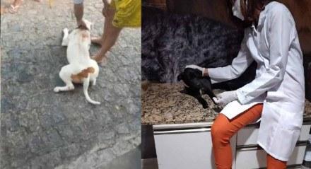 À esquerda, Pitbull, e, à direita, cachorro atacado