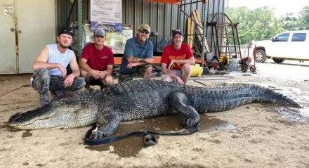 Artefatos históricos são encontrados em estômago de crocodilo.
