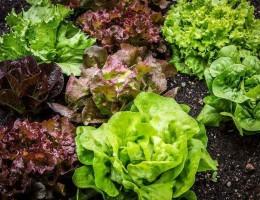Ao se analisar a cadeia de hortaliças, observou-se que a produção da China é 11,5 vezes maior que a do Brasil