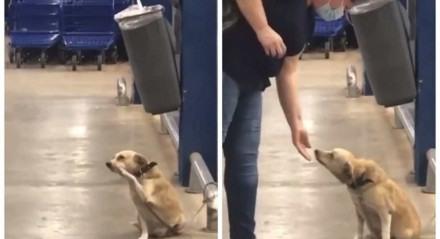 O cachorro aparece no vídeo acenando para pessoas em São Paulo