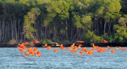 O balé dos guarás no Delta do Parnaíba é um dos principais passeios do Piauí.