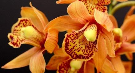 Dentre as espécies encontradas no evento estão bonsais, orquídeas, suculentas, cactos, rosas do deserto, além de outras variedades.