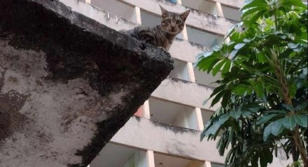 A organização SOS Animal PE conta que no edifício há cerca de 30 gatos, e que a maioria já está castrada e vacinada